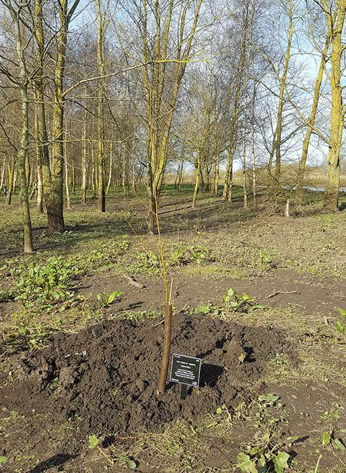 First_Willow_Arboretum