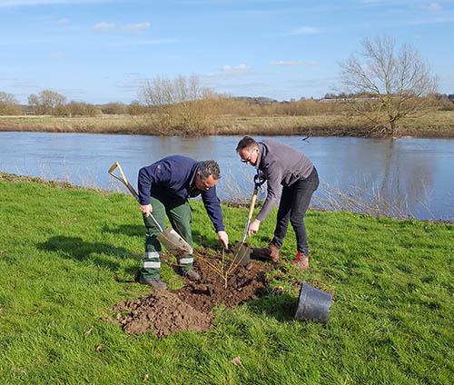 Planting_Second_Willow_Cutting_Arboretum